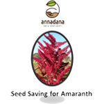 Seed Saving for Amaranth